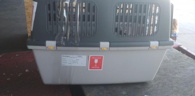 Kiy Avia Cargo Get Certified to Ship Live Animals by Air
